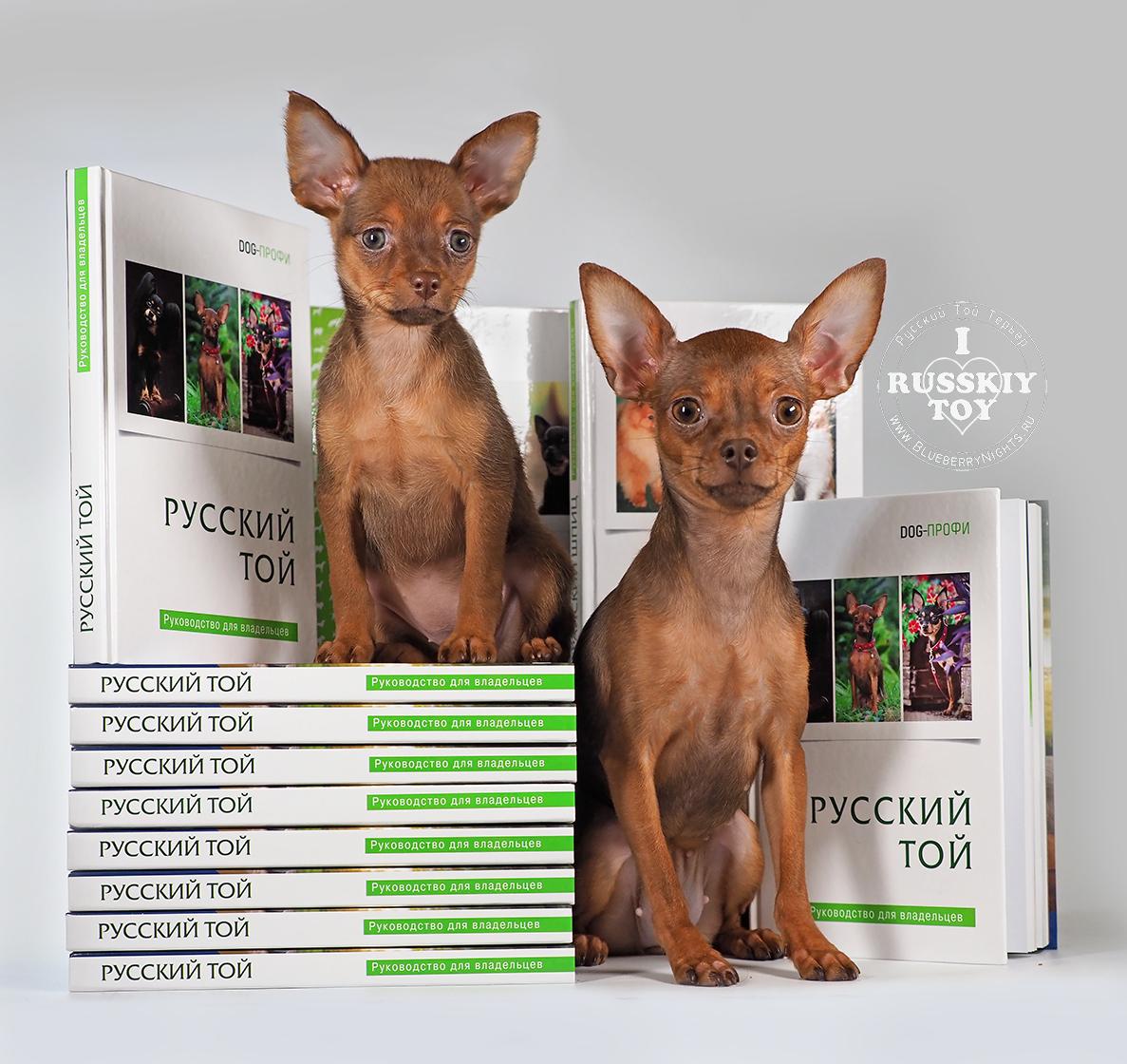 Книга Русский той купить автор Дугина А.