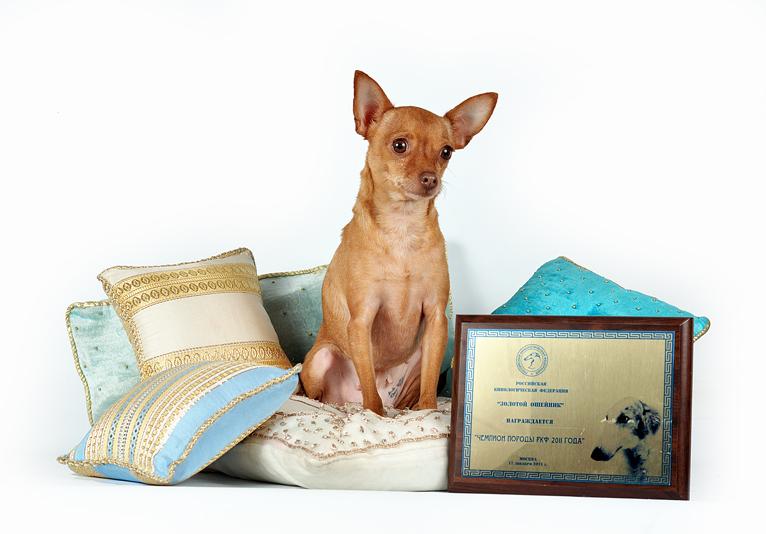 Диаманта - Чемпион Породы года - Diamanta - Breed Champion or the Year