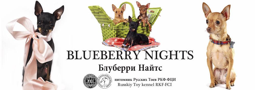 Блуберри Найтс / щенки той терьера / питомник Русских тоев / Blueberry Nights Russkiy toy kennel
